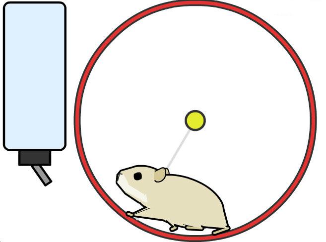 给你的个人网站领养只萌萌的小仓鼠